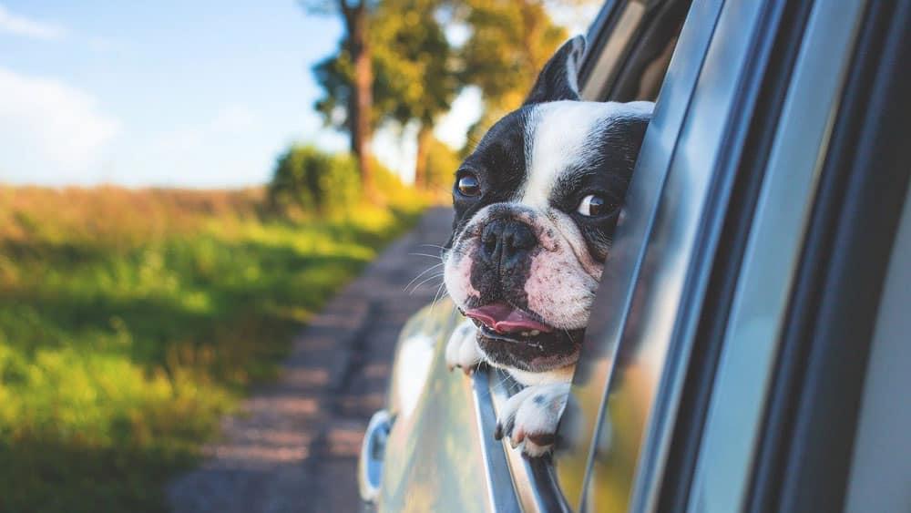 Find den perfekte bil til dine behov